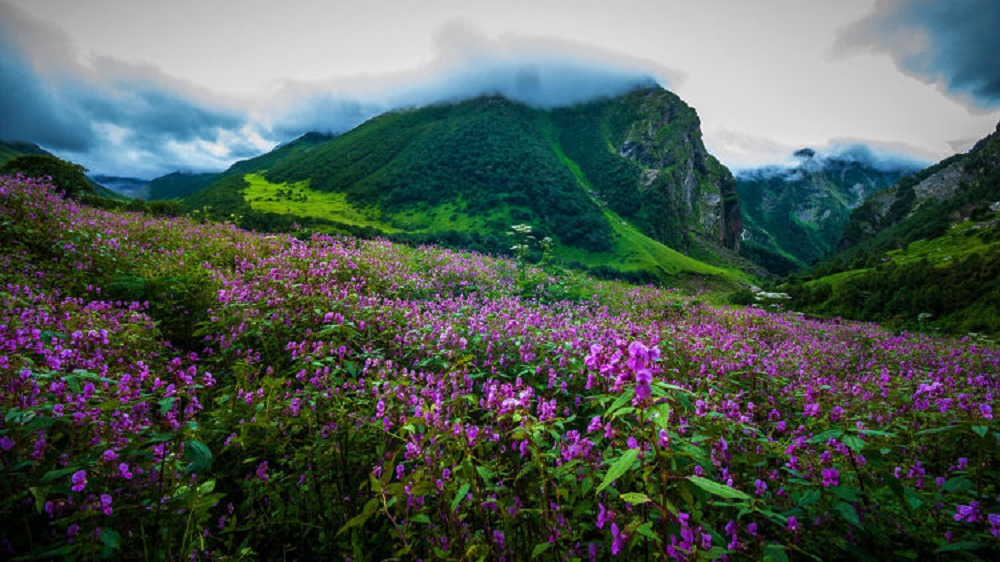 Valley of Flowers - An Amazing Trek Full of Flowers